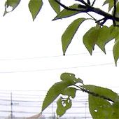9_7wakuraba
